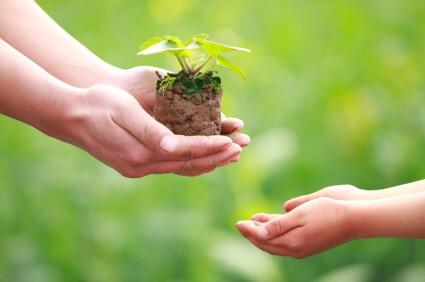 eco-vriendelijk-plantje-foto
